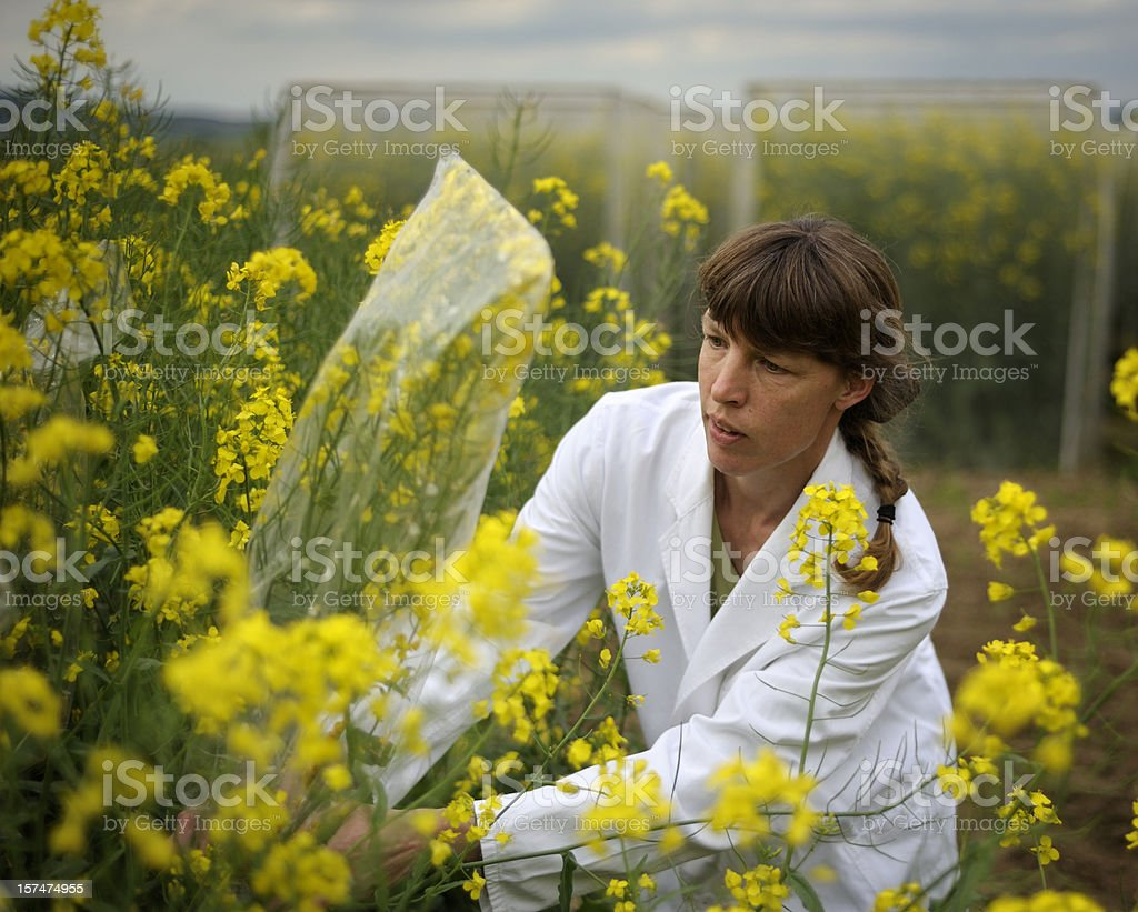 Biological tests royalty-free stock photo