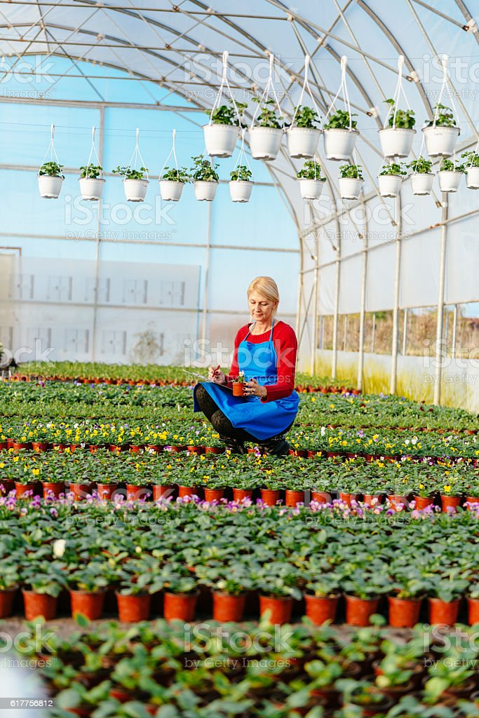 Biologist research plants and examines growth in greenhouse stock photo
