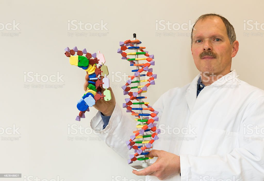 Biologist shows DNA and mRNA models stock photo