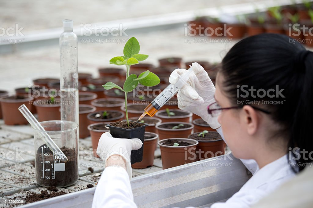 Biologist testing growth of sprout stock photo