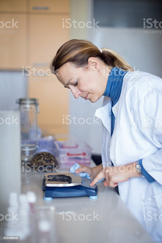 Biologist weigthing new specimen stock photo