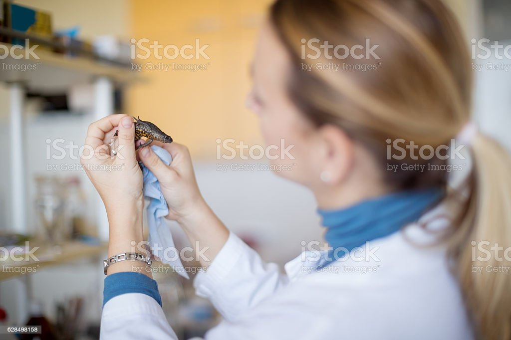Biologist with newt stock photo