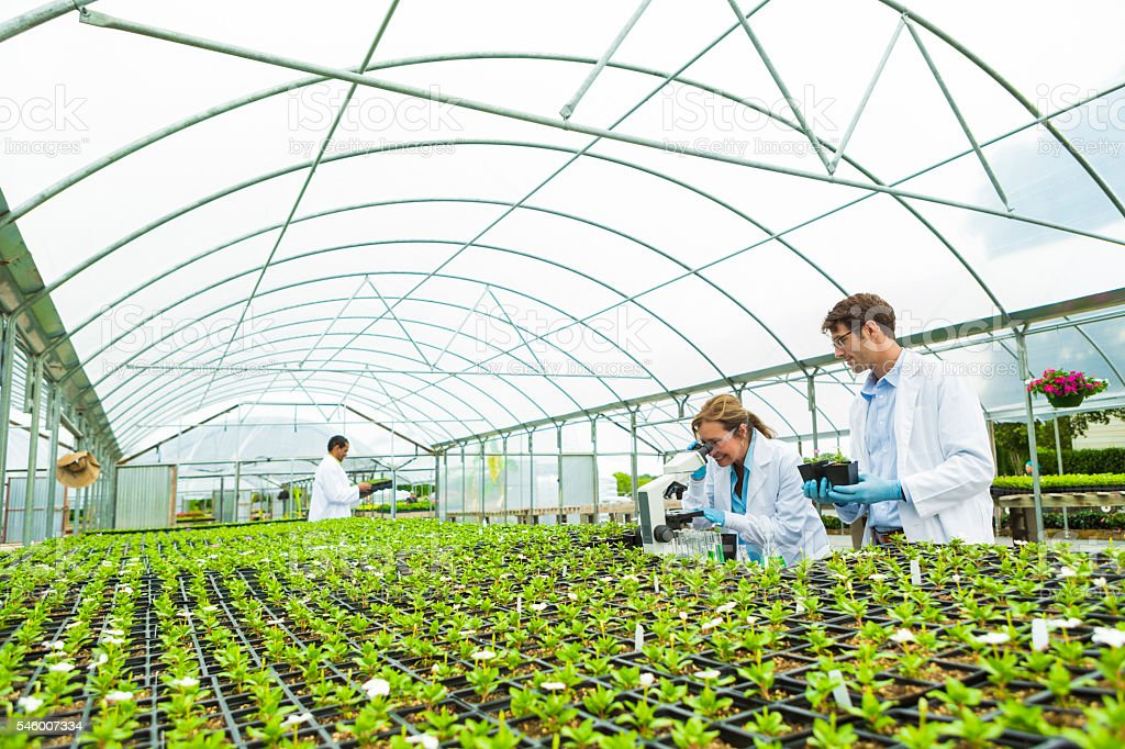 Biologists study in a greenhouse stock photo