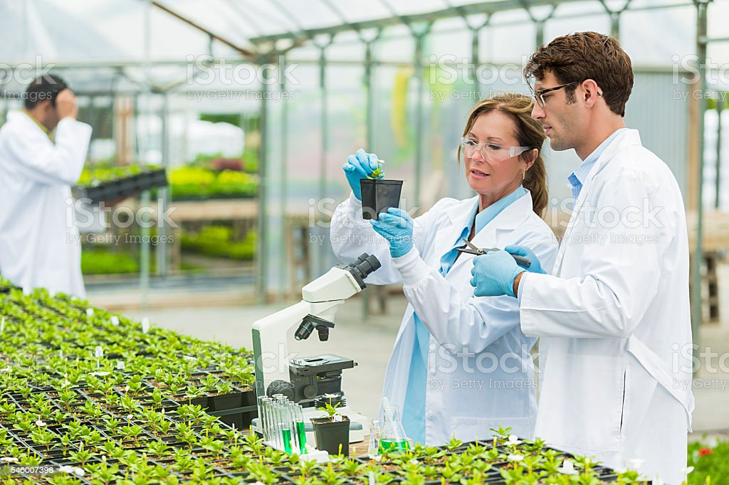 Biologists working in the lab stock photo