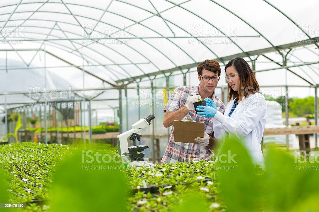 Biologists working together in a greenhouse stock photo