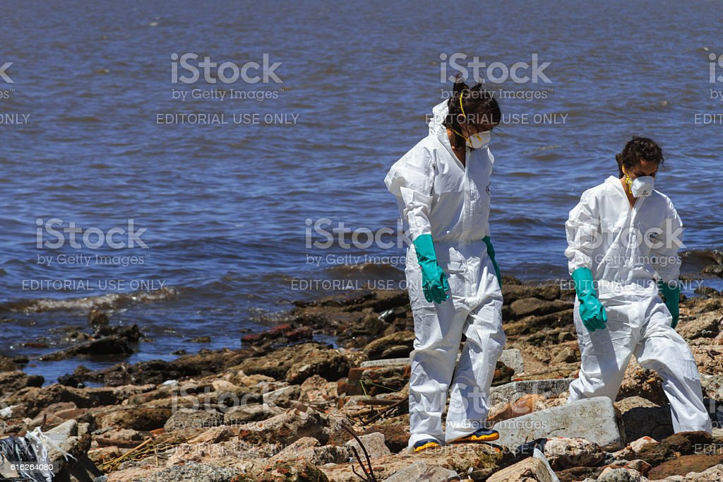 Biologists working with a dead ziphiid on the shores stock photo