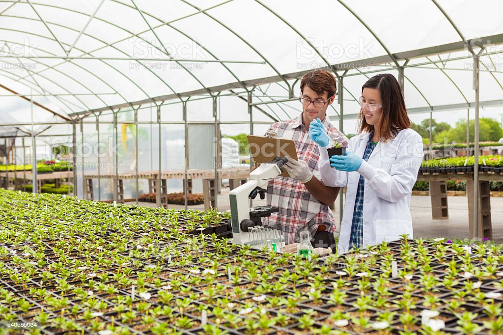 Biologists working with plants stock photo