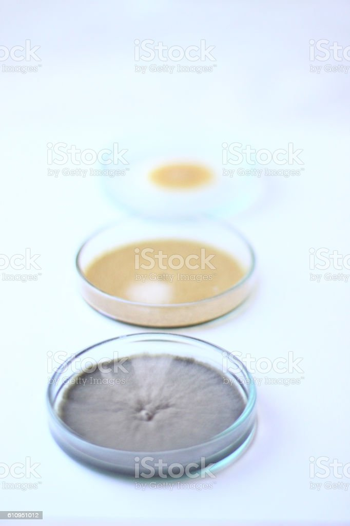 Biology culture stock photo
