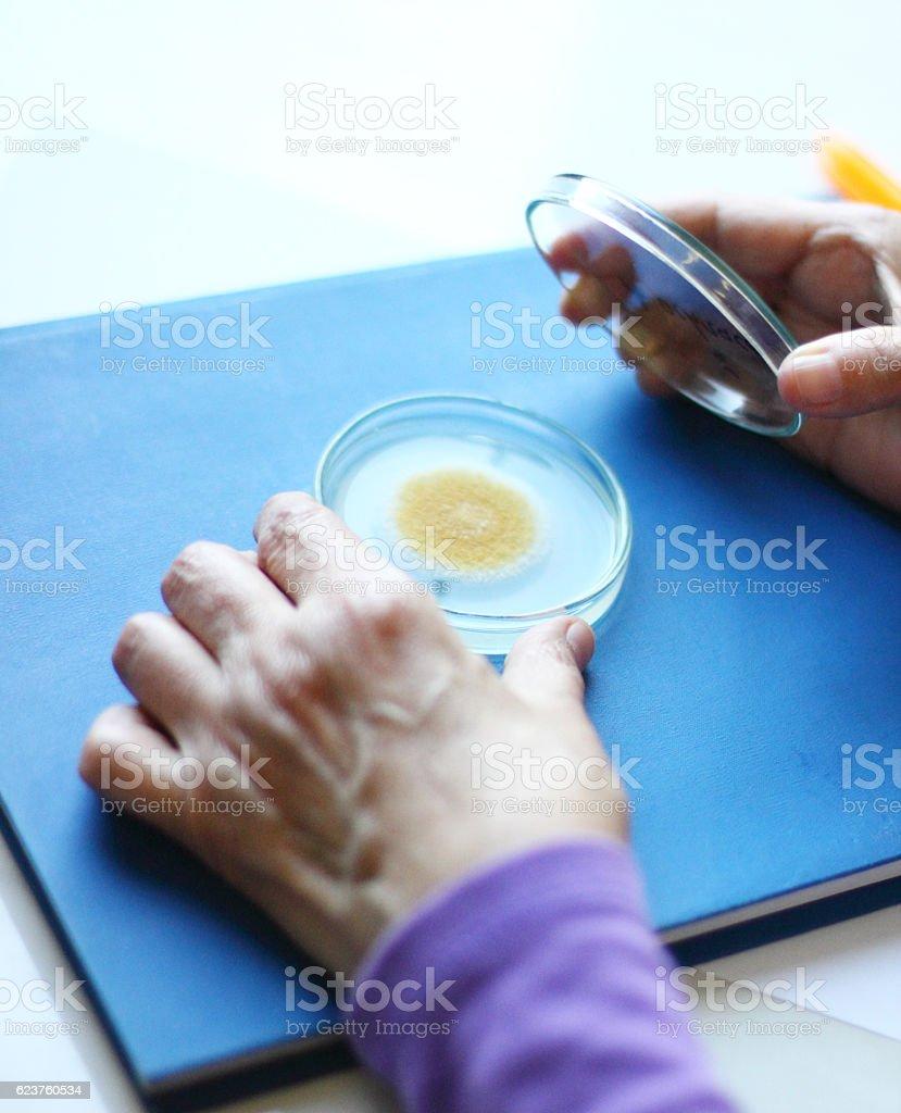 Biology culture-laboratory stock photo