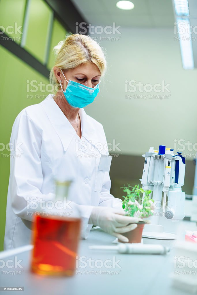 Biology expert working in laboratory with sample plants stock photo
