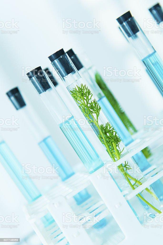 Biology investigation in laboratory stock photo