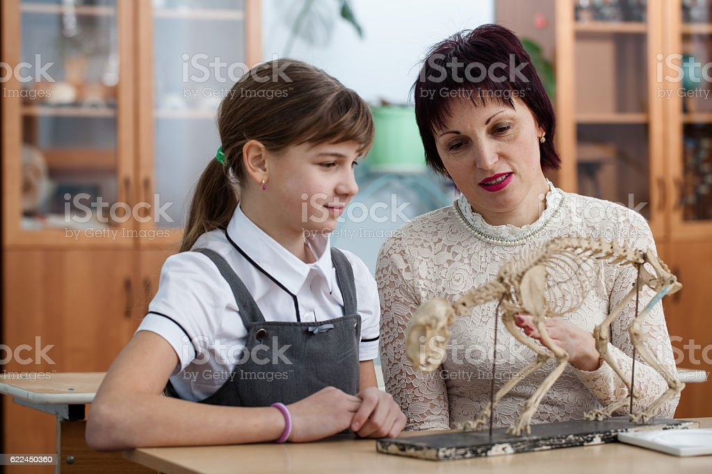 Biology lesson at schoo stock photo