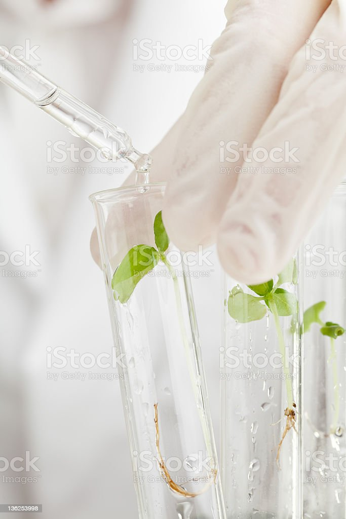Biology research stock photo