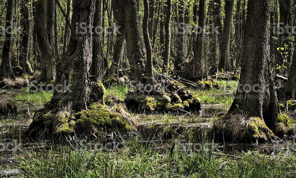 Biosphärenreservat Niedersächsische Elbtalaue stock photo