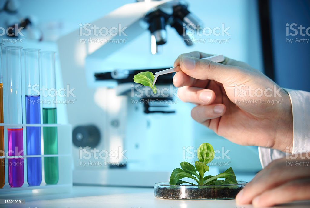 Biotechnology royalty-free stock photo