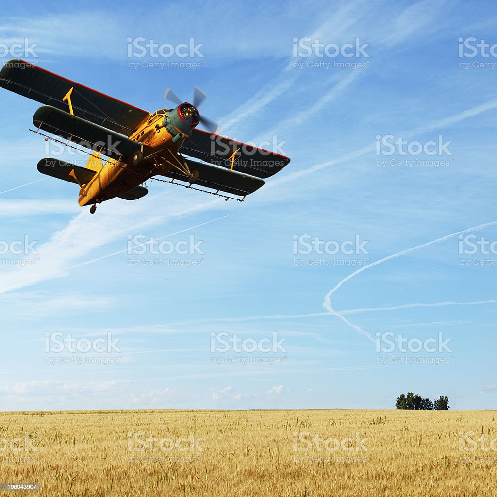 Biplane over the rye stock photo