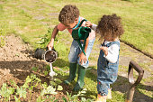 Biracial Little Boy And Toddler Watering Vegetables