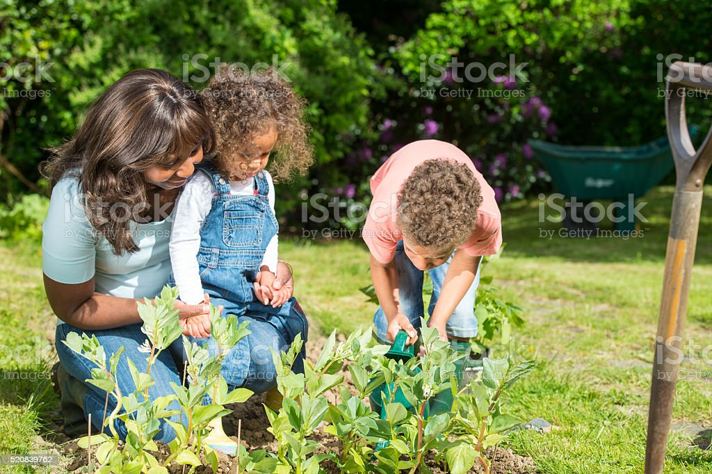 Biracial Little Boy And Toddler Watering Vegetables With Their Carer stock photo