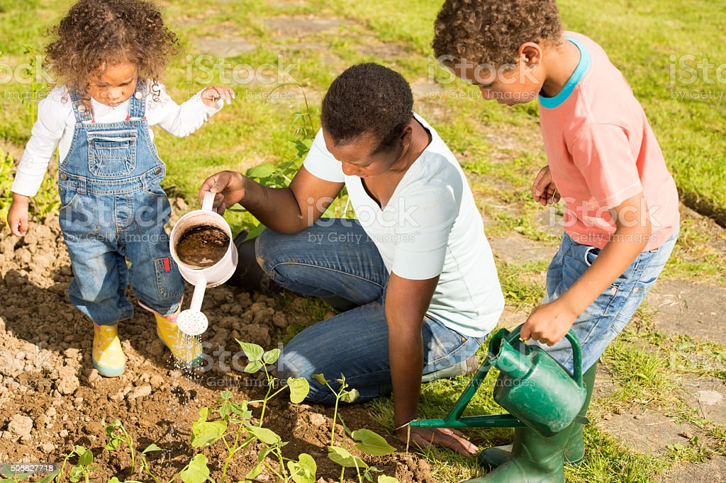 Biracial Little Boy And Toddler Watering Vegetables With Their Mother stock photo