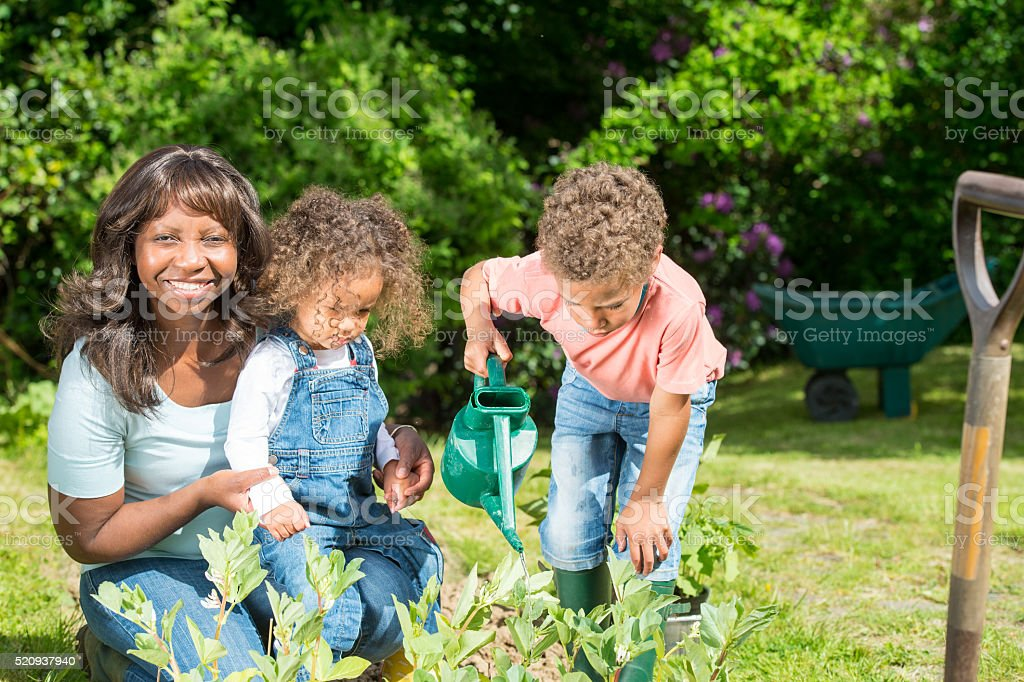 Biracial Little Boy And Toddler Watering Vegetables With Their Childeminder stock photo