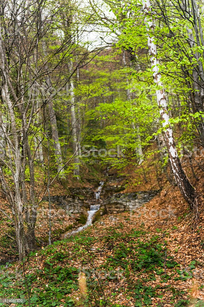Birch and stream in forest stock photo