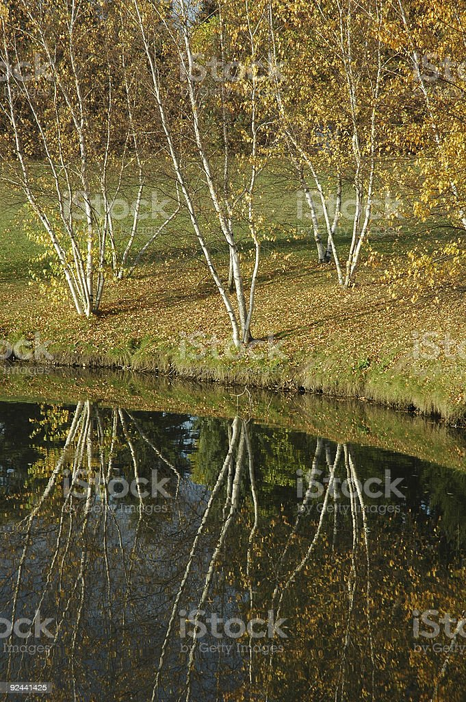 Береза's вид на воду Стоковые фото Стоковая фотография