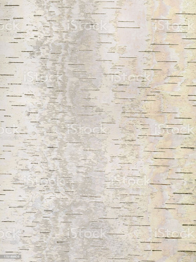 Birch bark background stock photo