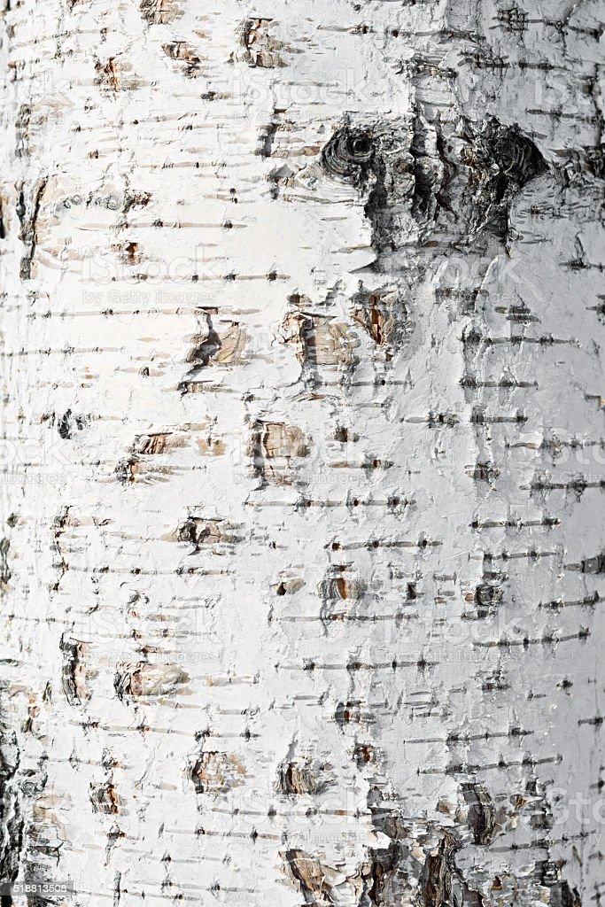 birch bark background stock photo