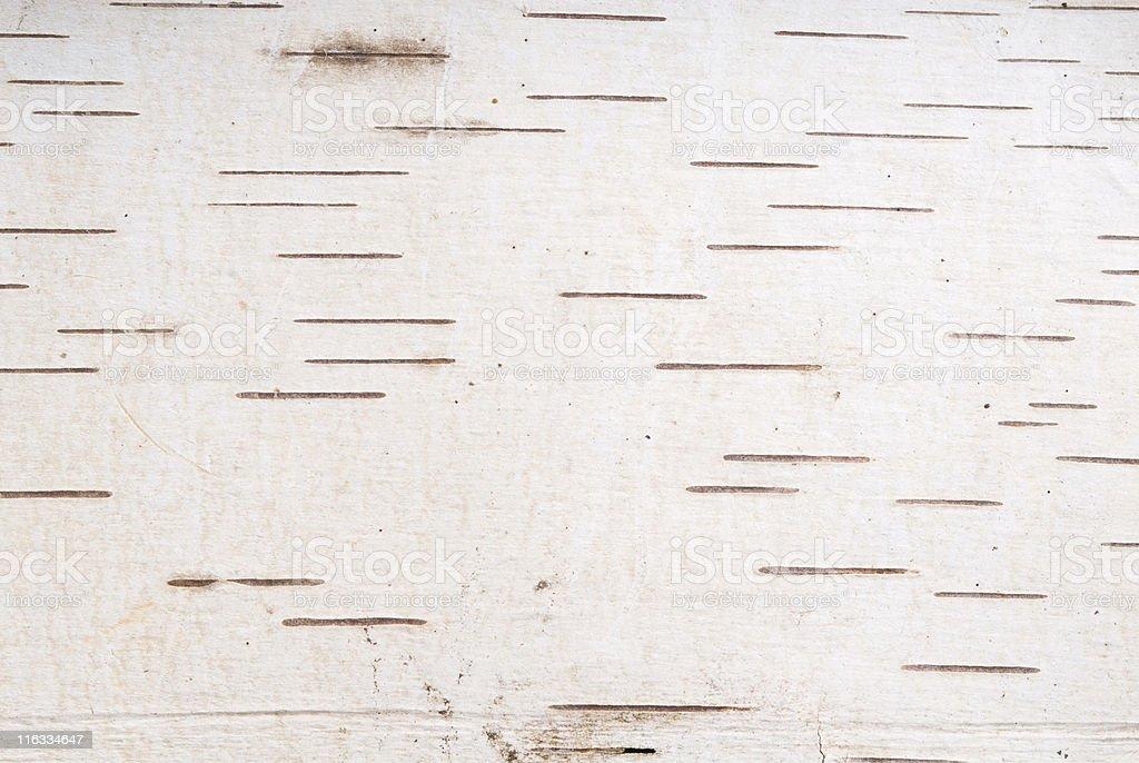Birch Bark Macro 2 stock photo