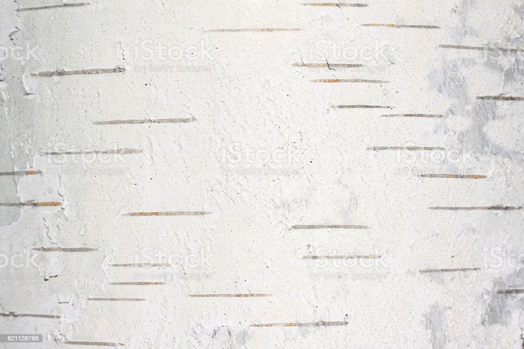 birch bark texture natural background paper close-up stock photo