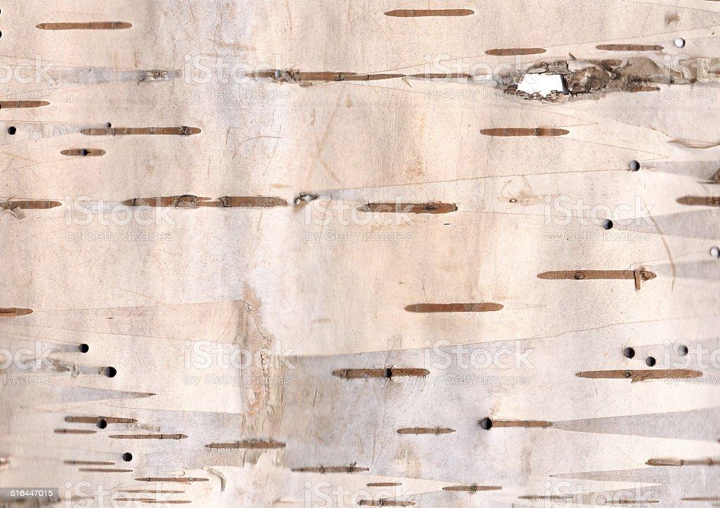 Birch bark texture stock photo