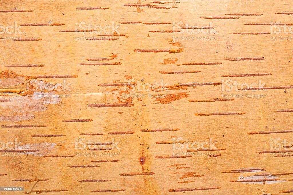 Birch cork background stock photo