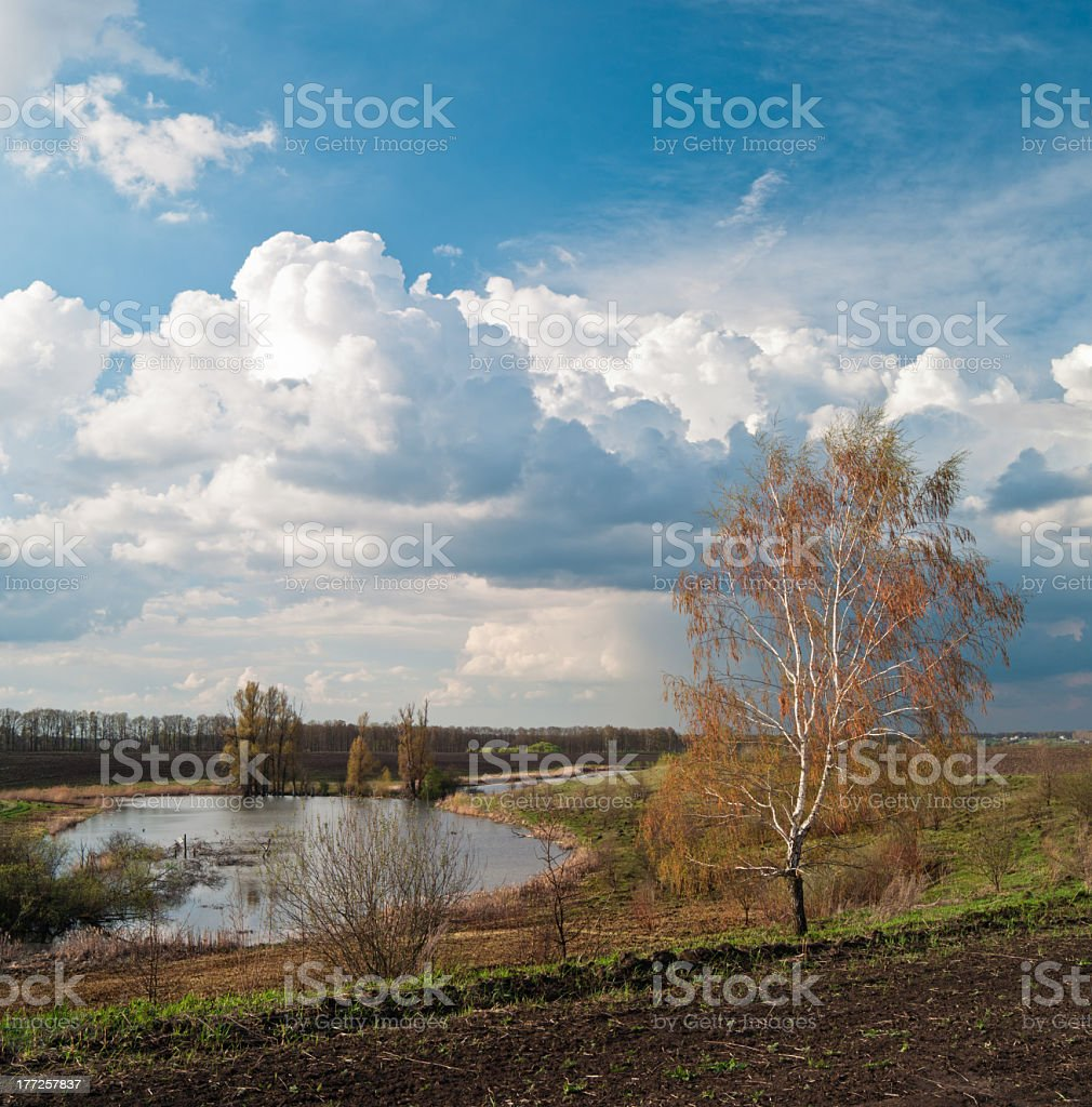 Birch grows on the hills. royalty-free stock photo