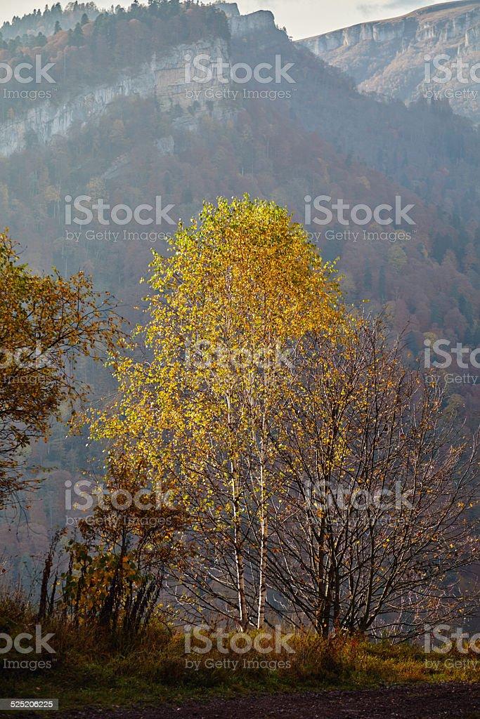 Birch mountain autumn mist stock photo