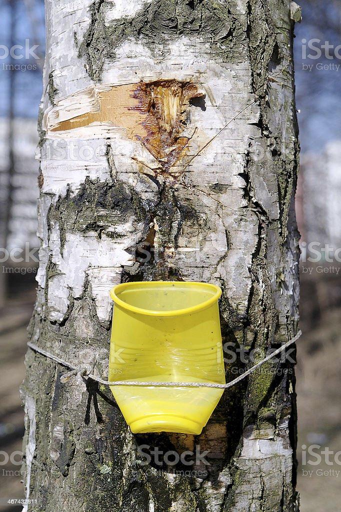 Birch sap royalty-free stock photo