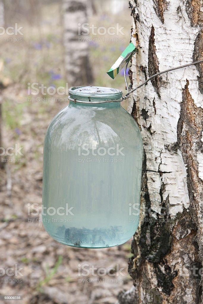 Birch sap stock photo