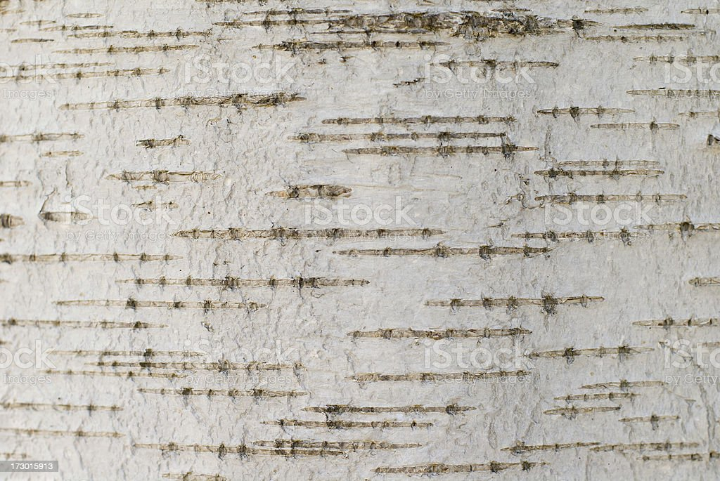 Birch Tree Texture stock photo