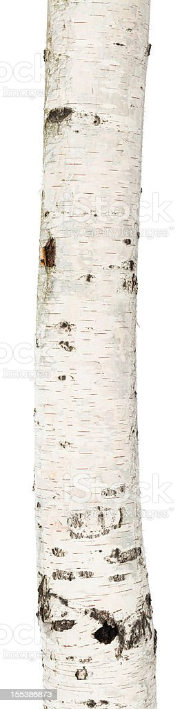 A birch trunk on a white background stock photo