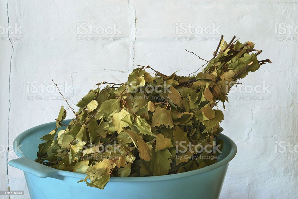 birch twigs royalty-free stock photo