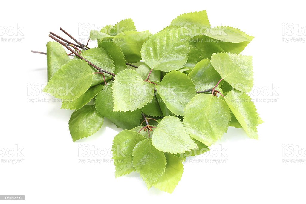 Birch twigs with green leaves royalty-free stock photo