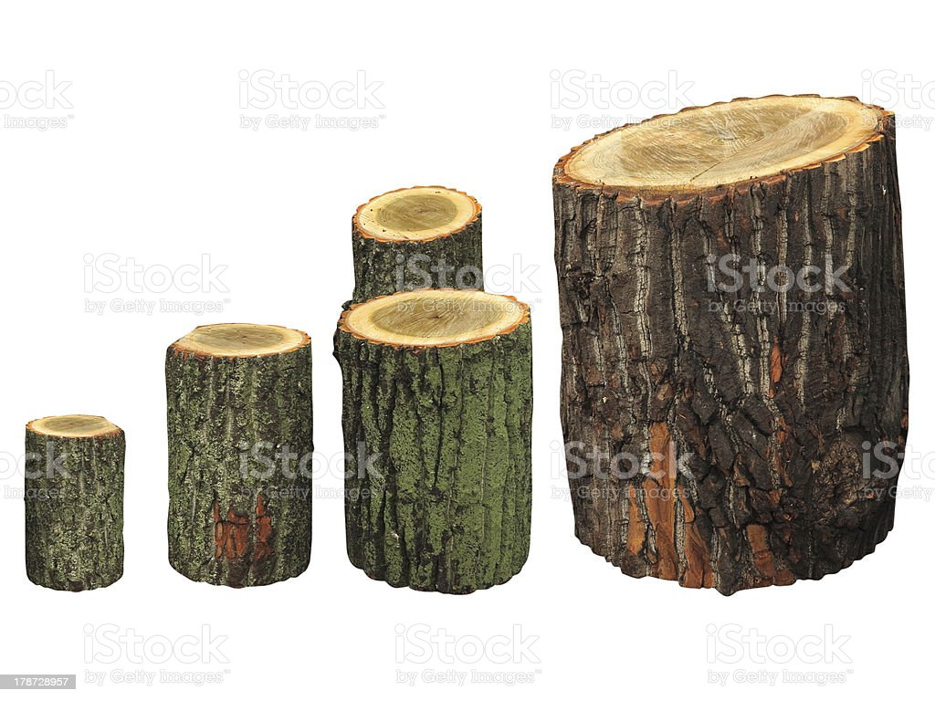Bétula registos de madeira isolado no branco foto de stock royalty-free