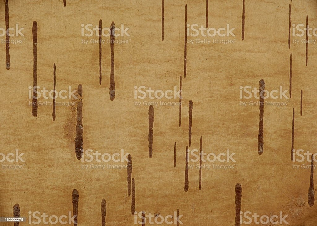 Birch-bark texture royalty-free stock photo