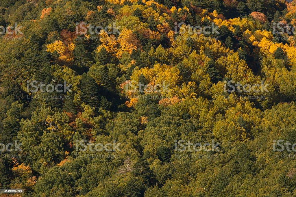 Birches the volcano Etna in autumn stock photo