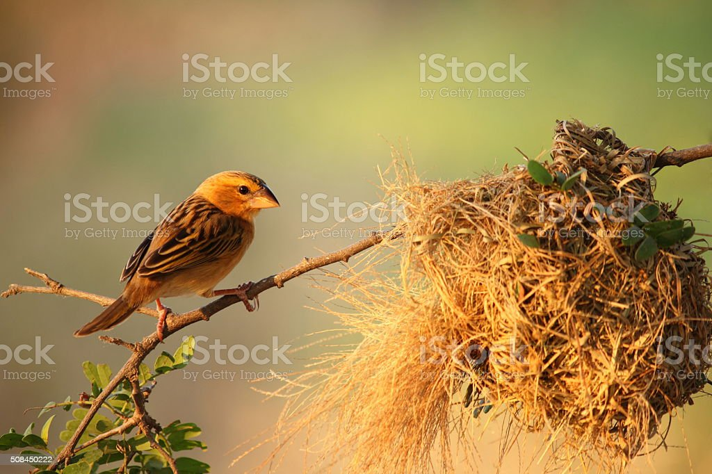 Bird and Bird's Nest stock photo