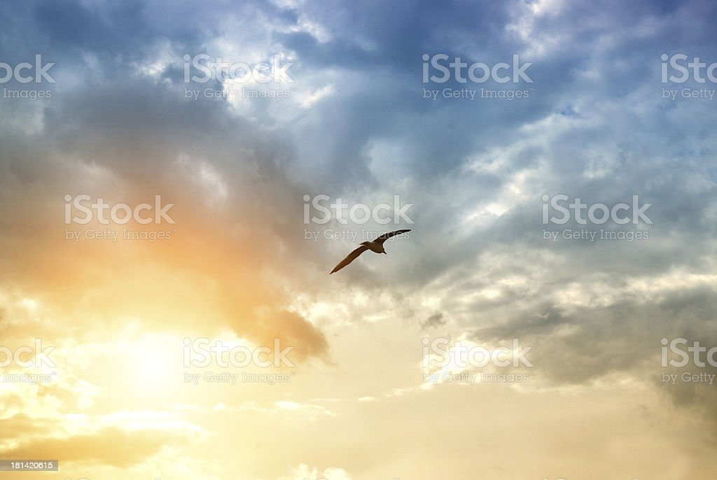 bird and dramatic clouds royalty-free stock photo