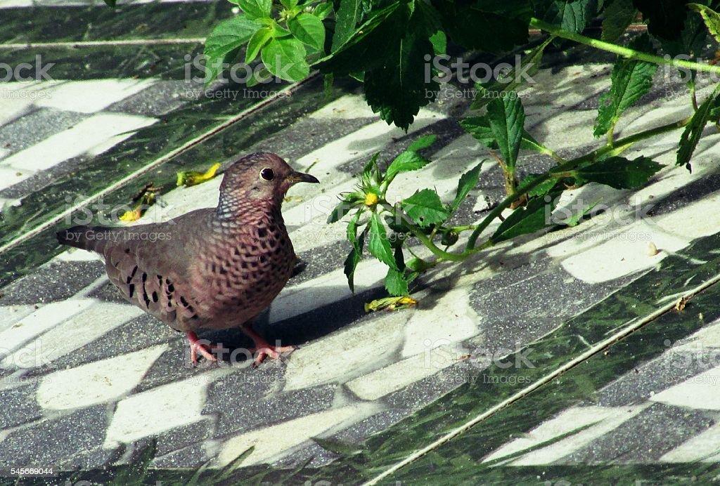 Bird and flowers in Amazon, Brazil stock photo