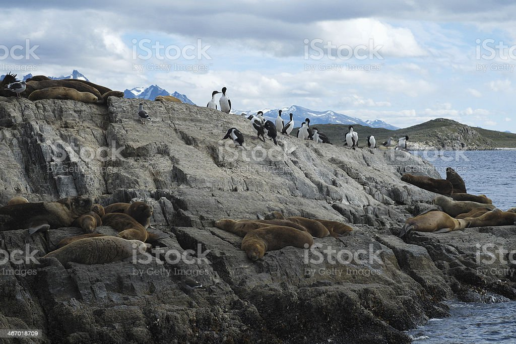 Bird and Sea Lions Colony on the Beagle Channel royalty-free stock photo