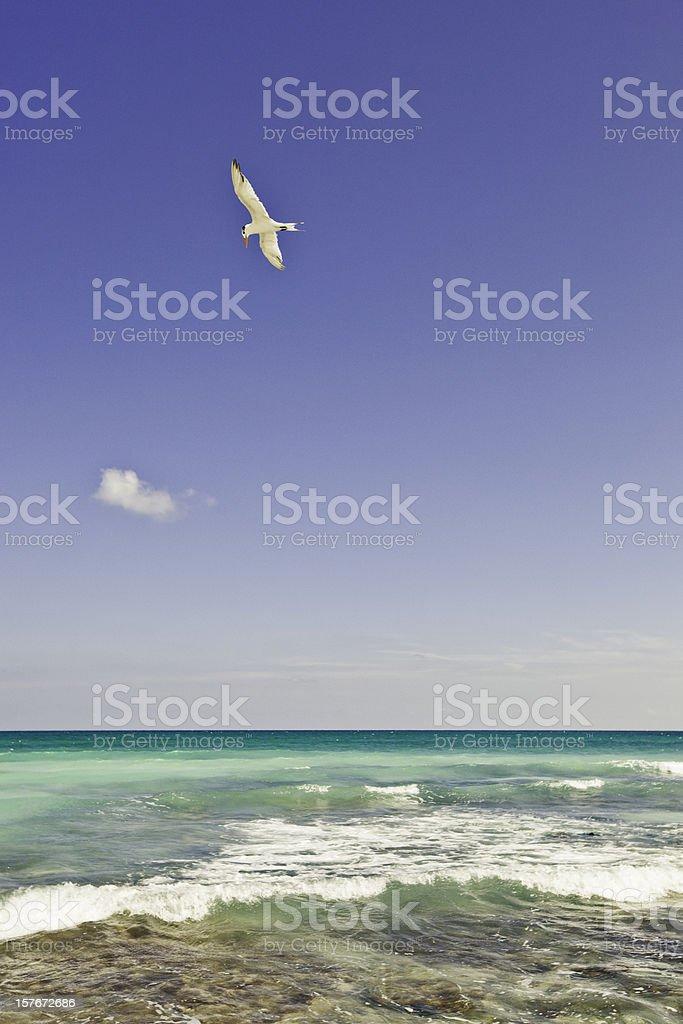 Bird and sea royalty-free stock photo