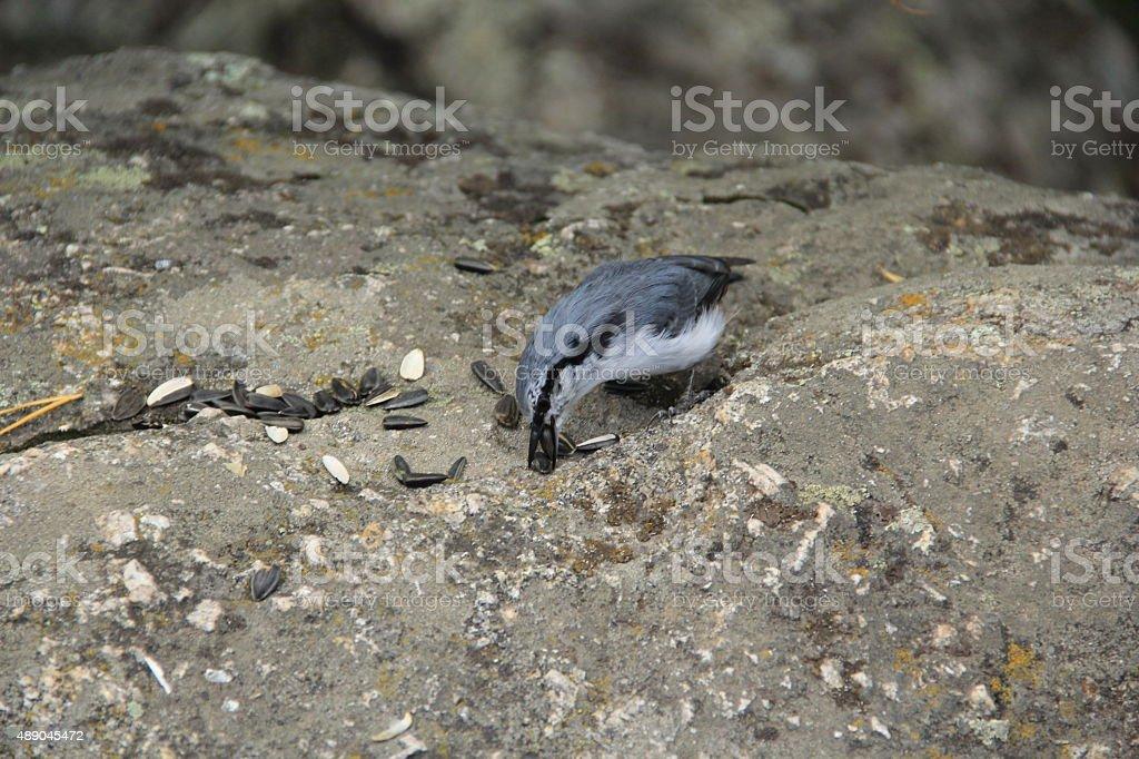 Bird and seeds stock photo