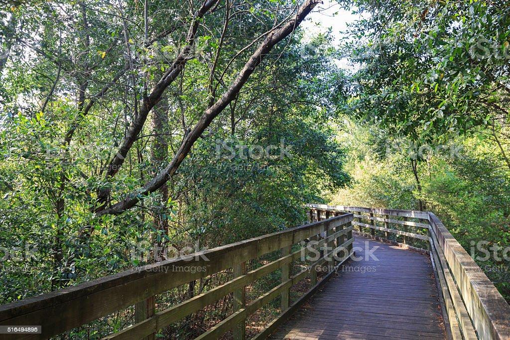 Bird area of Houston Arboretum Nature Center royalty-free stock photo